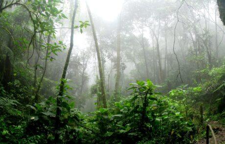 amazonie-deforestation