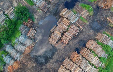 deforestation-amazonie-soja